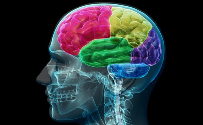misofonia-cervello-umano