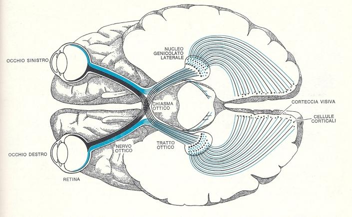misofonia-e-l'-elaborazione-degli-stimoli-visivi